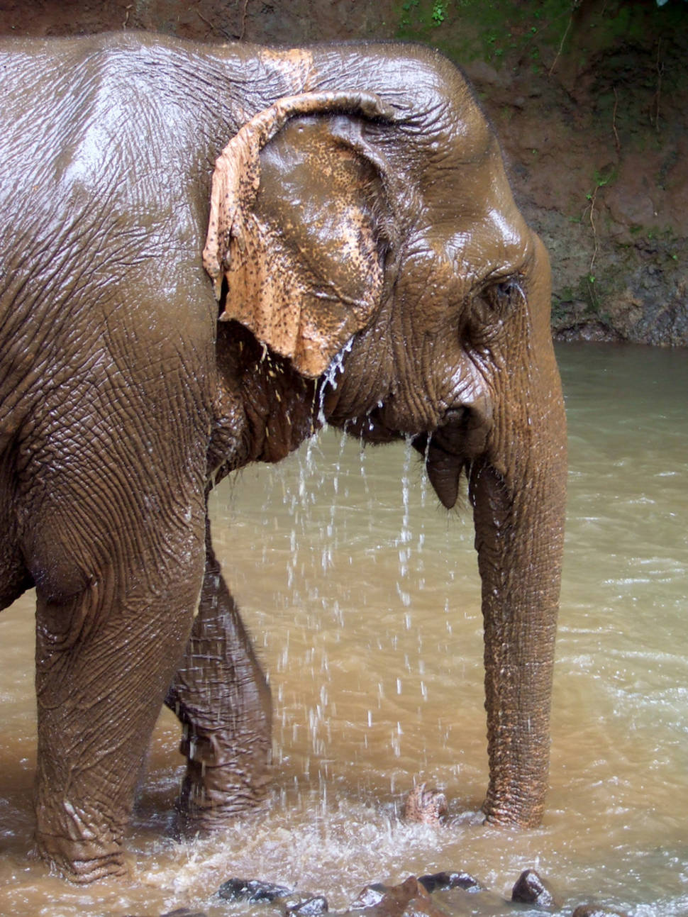 Best time to see Wash an Elephant in Cambodia