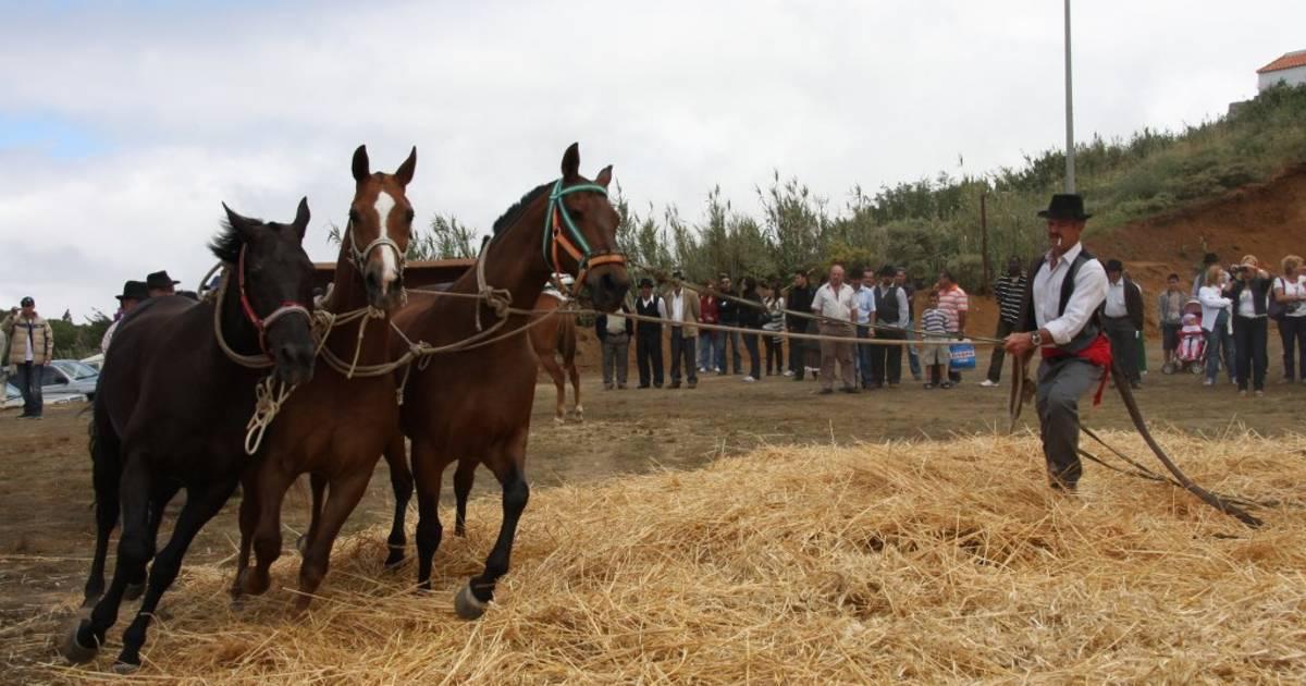 Dia de la Trilla in Canary Islands - Best Time