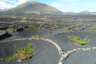 Lanzarote Volcanic Vineyards