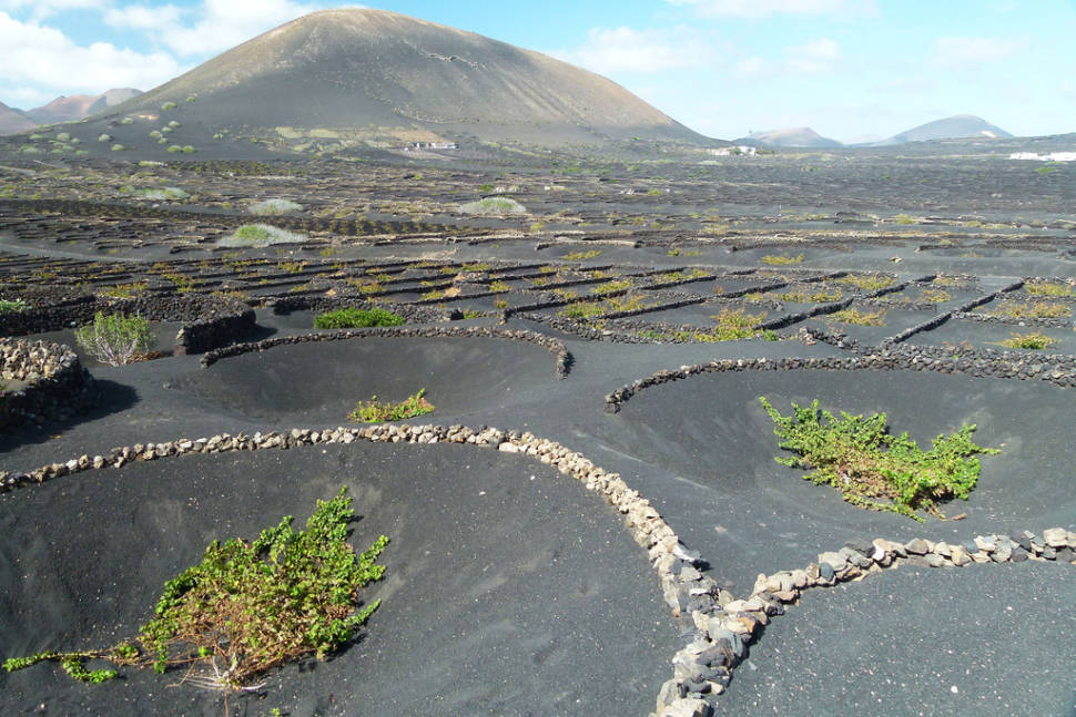 Lanzarote Volcanic Vineyards in Canary Islands - Best Time