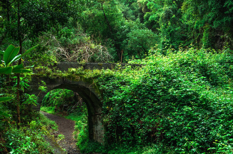 Laurel Forests in Canary Islands - Best Time