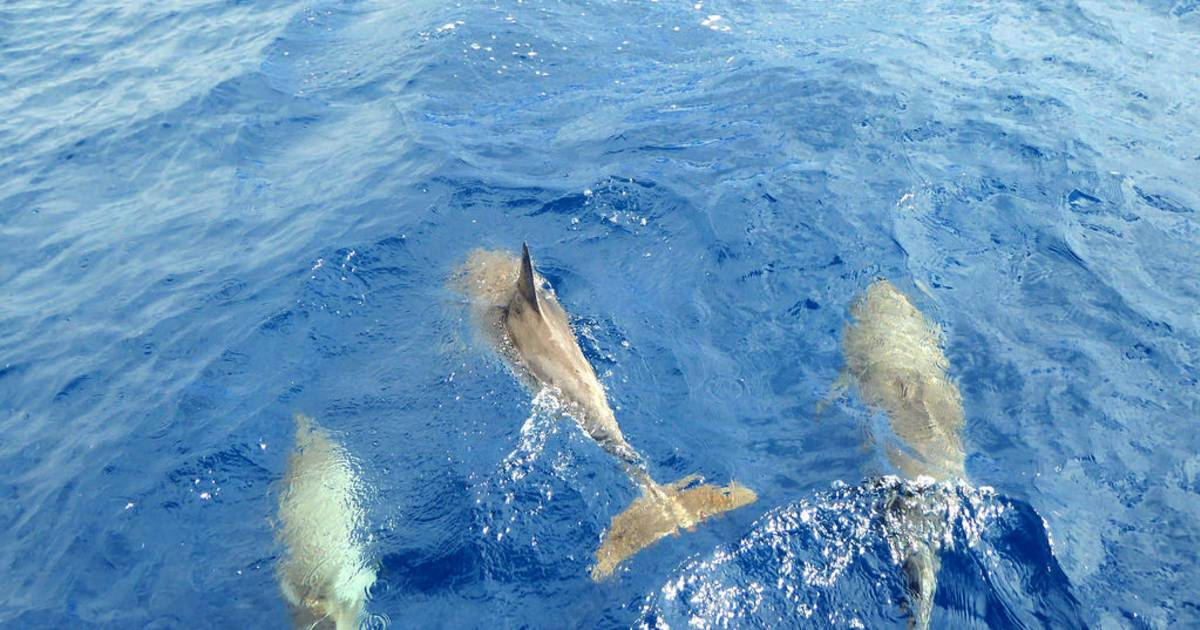 Whale and Dolphin Watching in Canary Islands - Best Time
