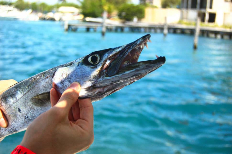 Sport Fishing in Cancun - Best Time