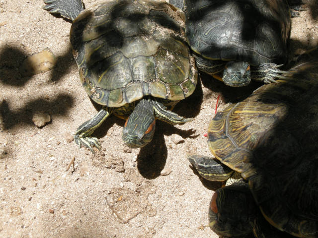Best time to see Turtle Nesting and Hatching in Cancun