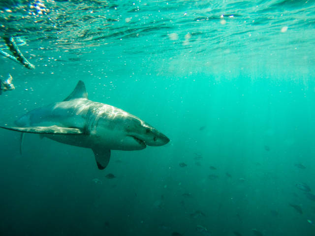 Diving with the White Sharks in Cape Town - Best Time