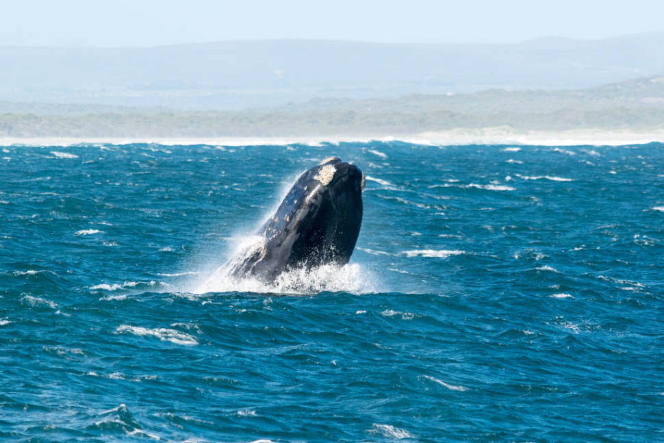 Land-Based Whale Watching in Cape Town - Best Time