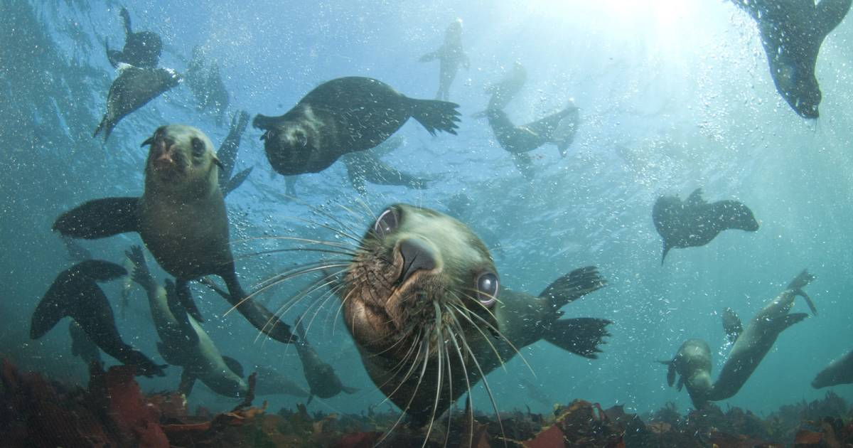 Seal Snorkeling in Cape Town - Best Time