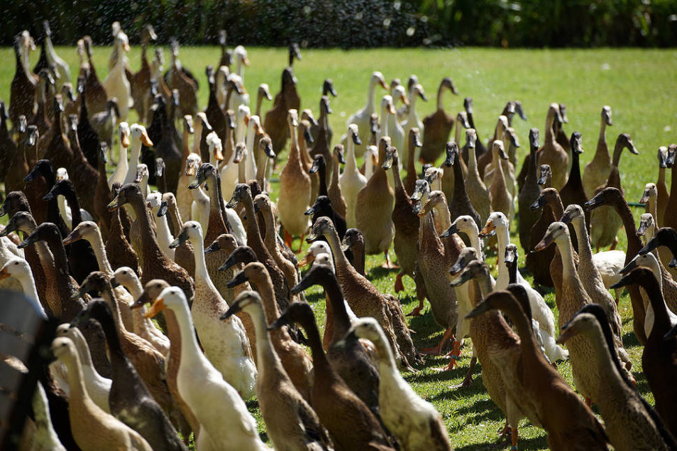 Best time for The Army of Ducks in Cape Town