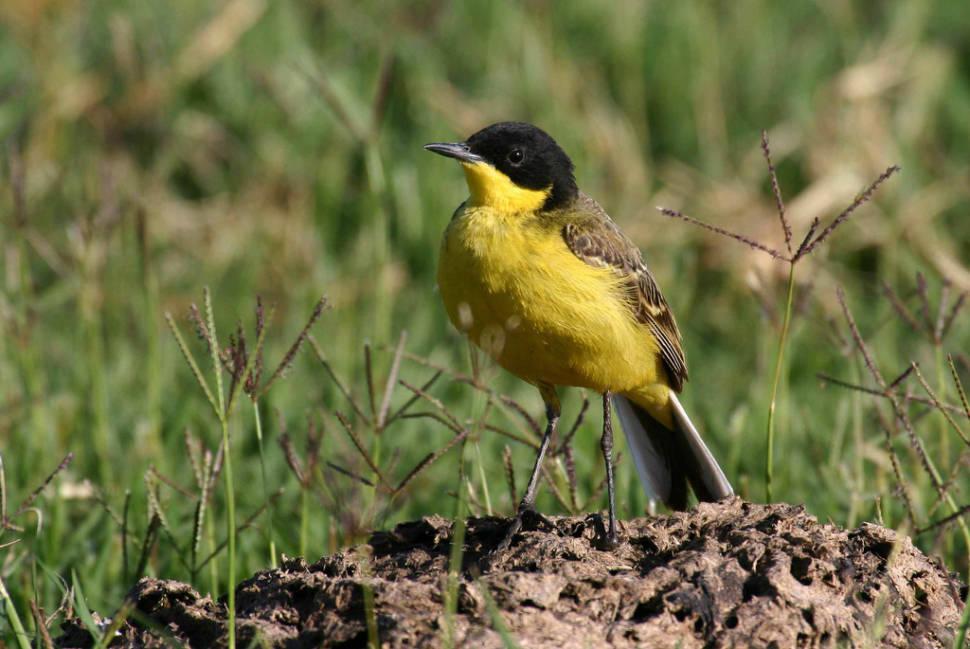 Birdwatching in Cappadocia - Best Time