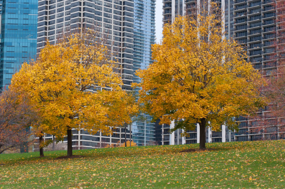 Autumn in Chicago - Best Time