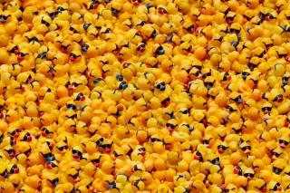 Rubber Ducky Race