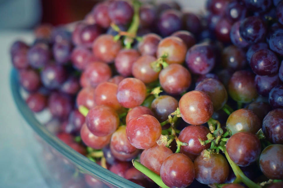 Best time for Grape Harvest in Chile