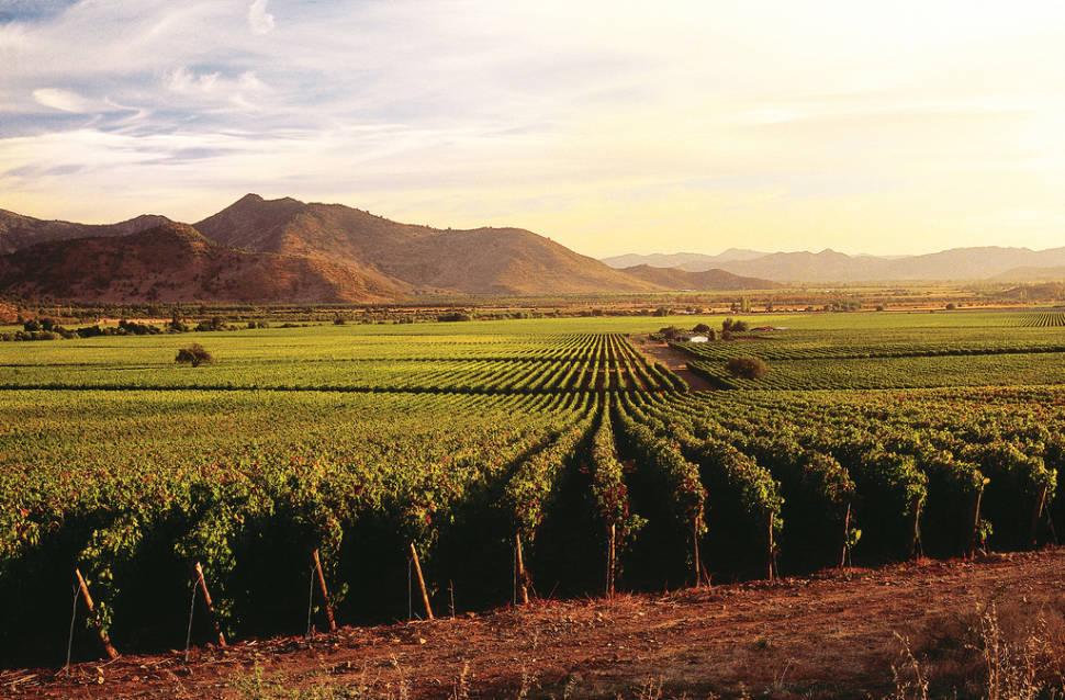 Grape Harvest in Chile - Best Season