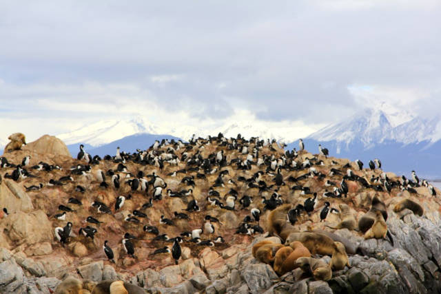 Best time for Patagonia Wildlife in Chile