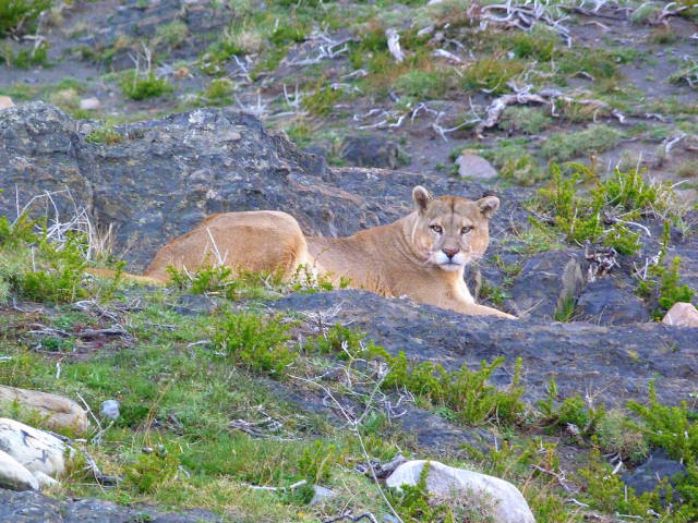 Patagonia Wildlife in Chile - Best Season
