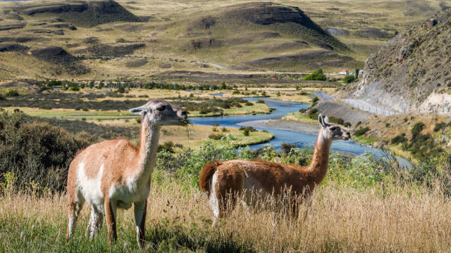 Patagonia Wildlife in Chile - Best Time