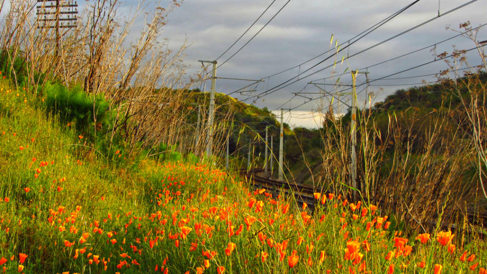 Best time for Wildflowers of Patagonia in Chile