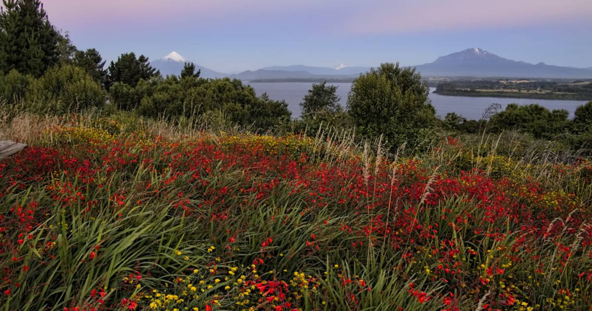 Wildflowers of Patagonia in Chile - Best Time