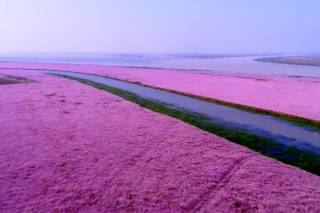 Flower Blooming at Poyang Lake