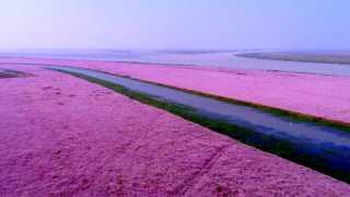 Flower Blooming at Poyang Lake