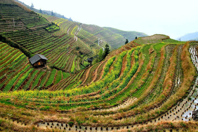 Best time to see Longsheng (Longji) Rice Terraces in China