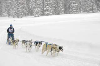 Dog Sledding & Snow Tubing