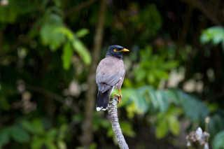 Birdwatching during Breeding Season
