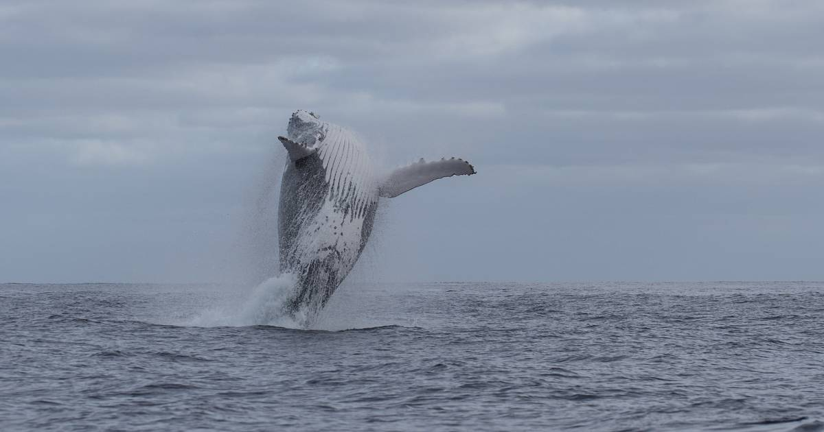 Whale Watching in Rarotonga & Cook Islands - Best Time