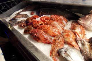 Chapon Fish