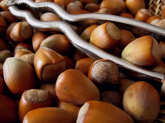 Hazelnut Season in Corsica - Best Time