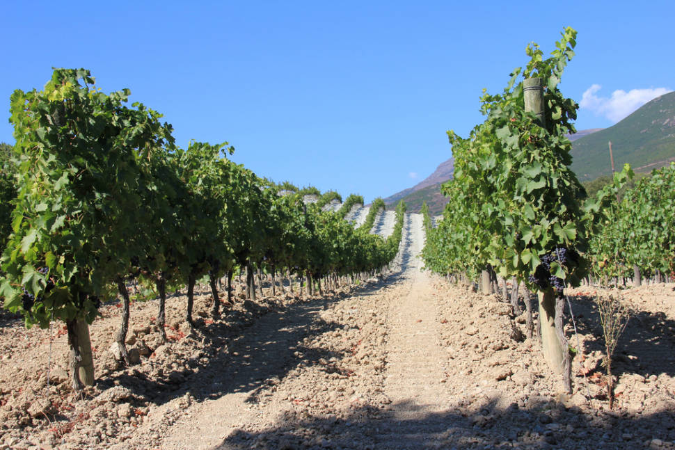 Best time to see Wine Season in Corsica