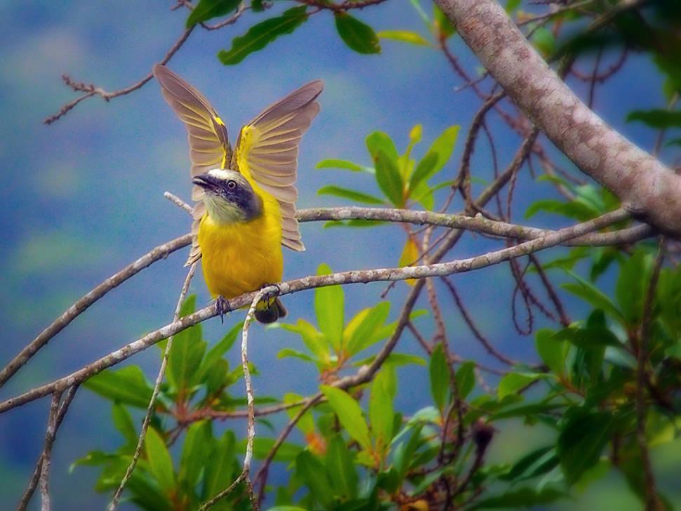 Birdwatching in Costa Rica - Best Time