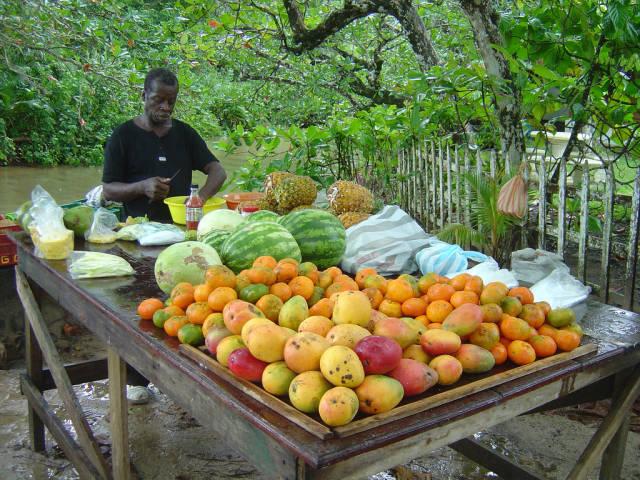 Best time for Mango Season in Costa Rica