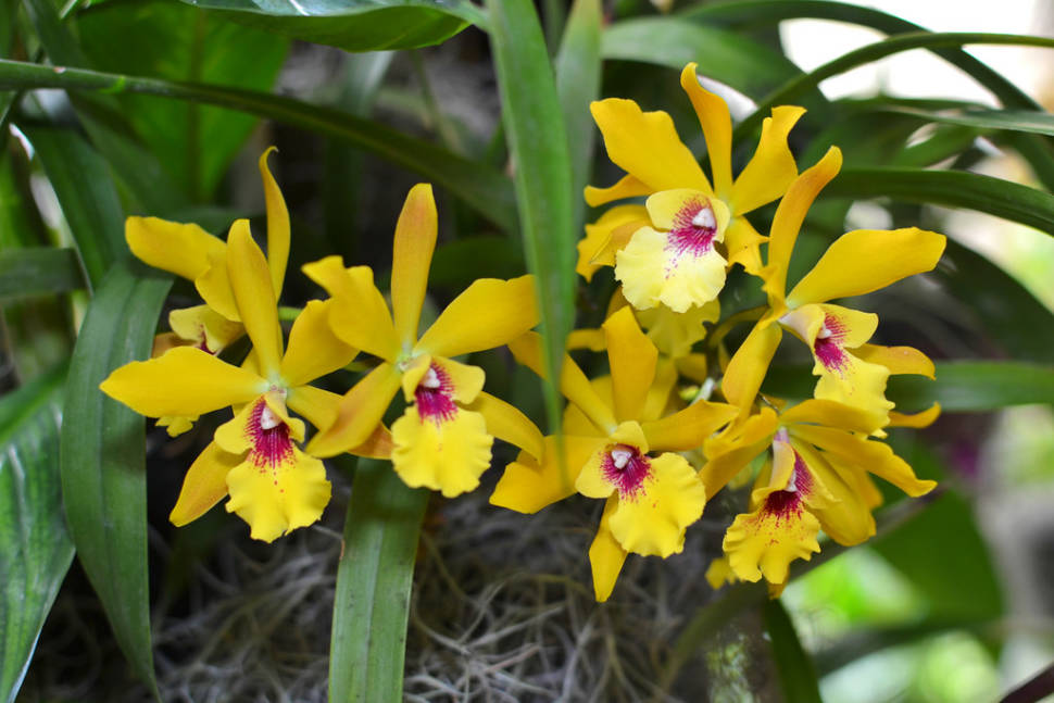 Orchids in Costa Rica - Best Season