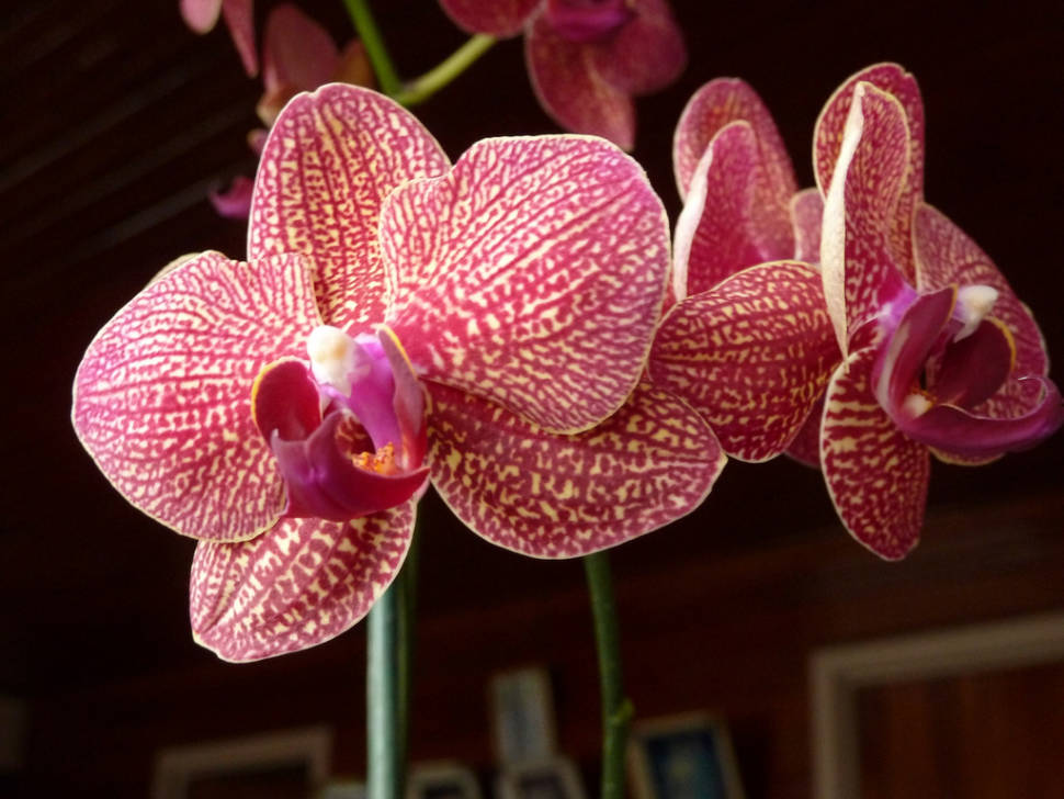 Orchids in Costa Rica - Best Time