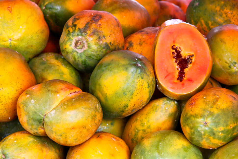 Papaya in Costa Rica - Best Season