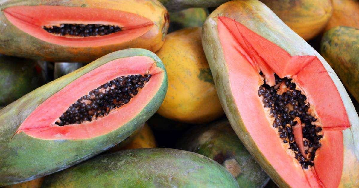 Papaya in Costa Rica - Best Time