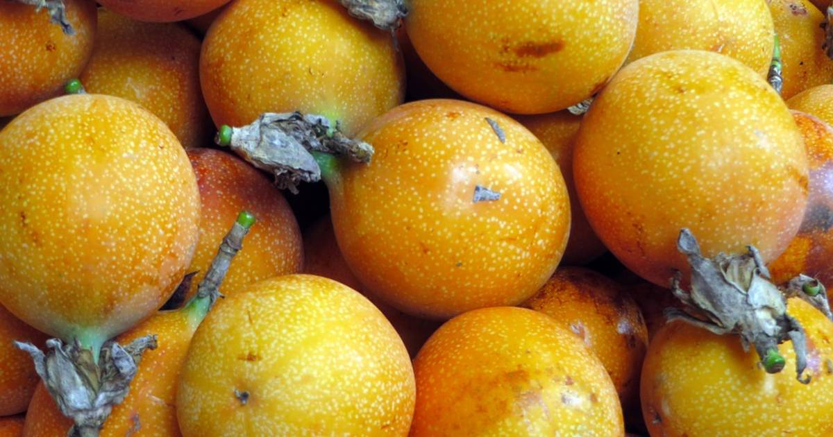 Passion Fruit or Maracuya in Costa Rica - Best Time