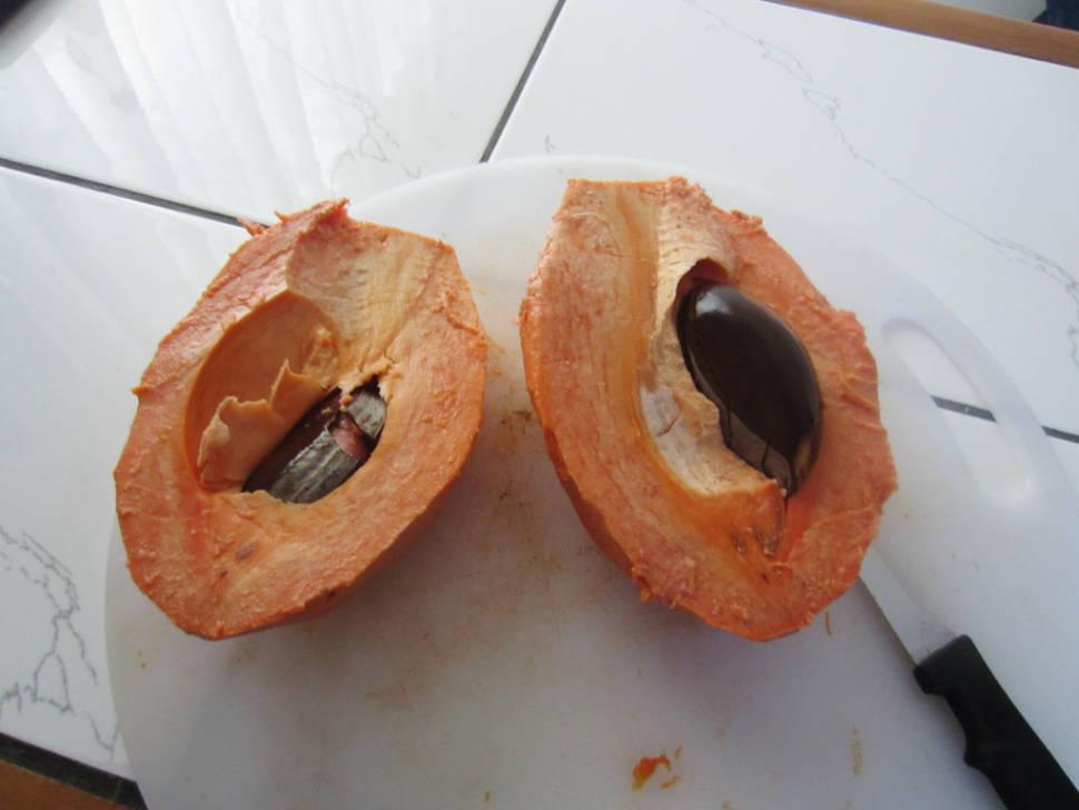 Sapote in Costa Rica - Best Time