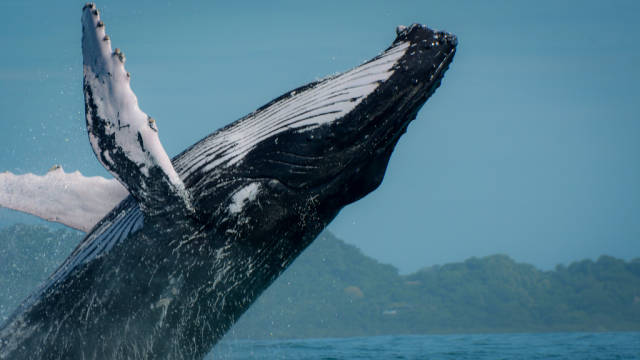Whale Watching in Costa Rica - Best Time