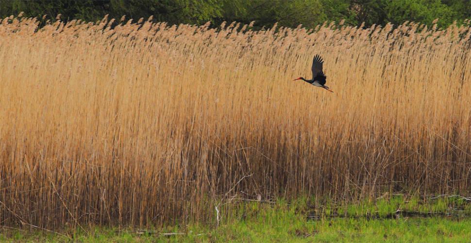 Best time for Birdwatching in Kopacki Rit in Croatia
