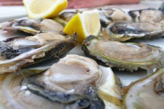Oysters Season