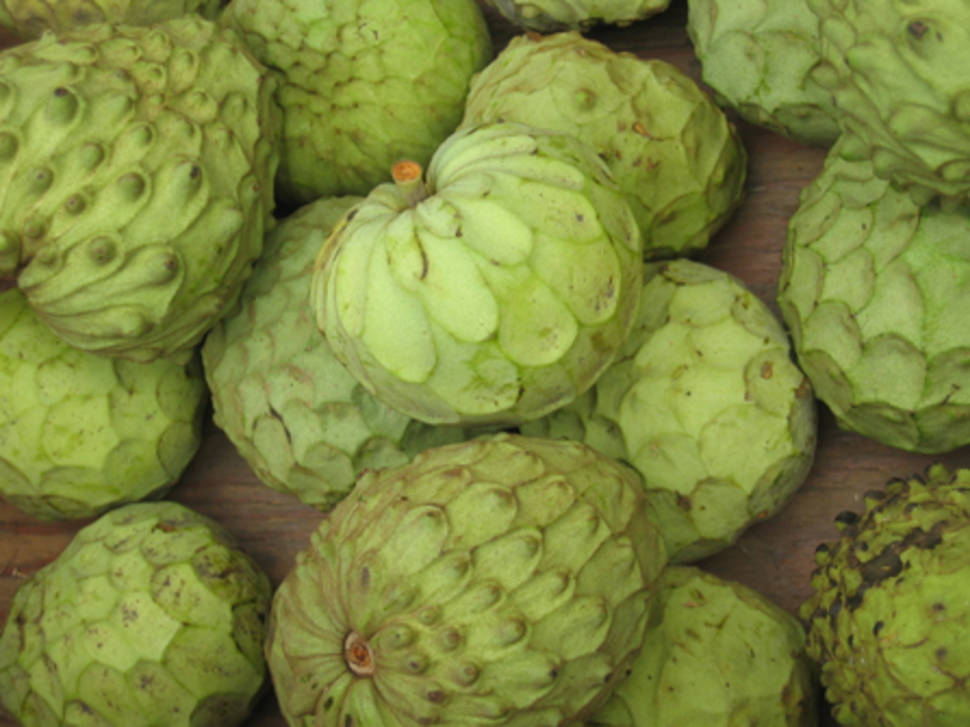 Cherimoya Season in Cuba - Best Time