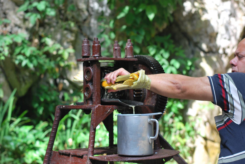 Best time for Guarapo Drink in Cuba