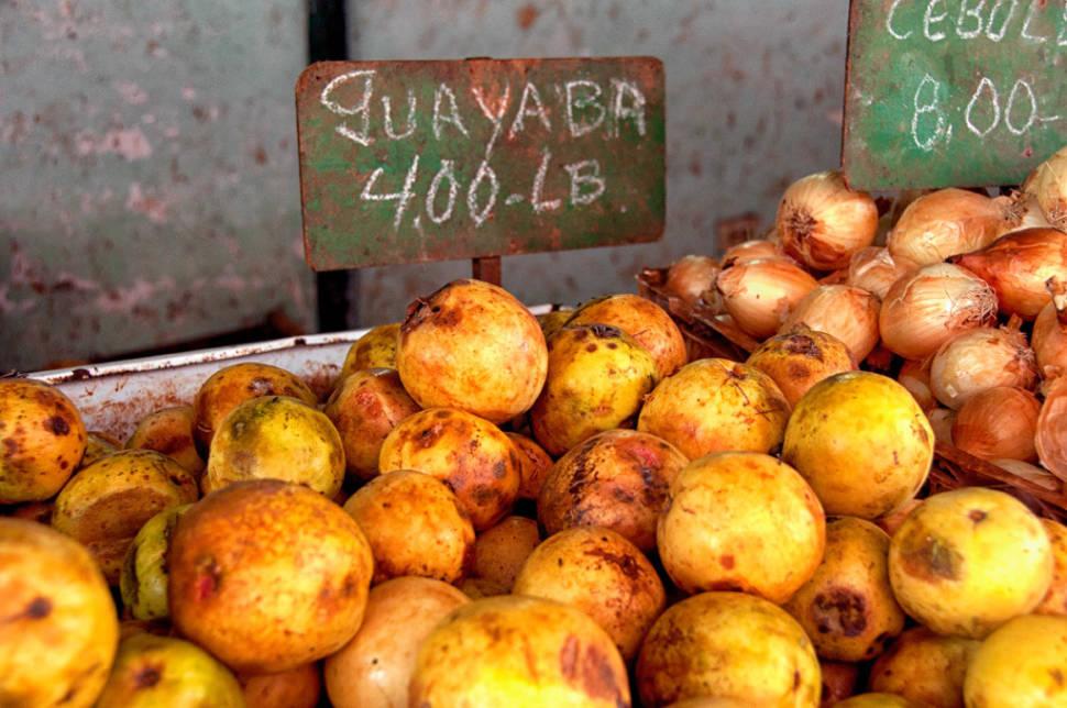 Guava or Guayaba in Cuba - Best Time
