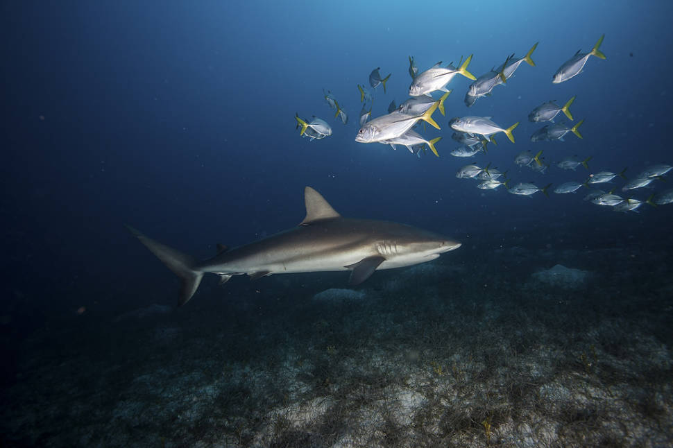 Best time to see Snorkeling and Diving in Cuba