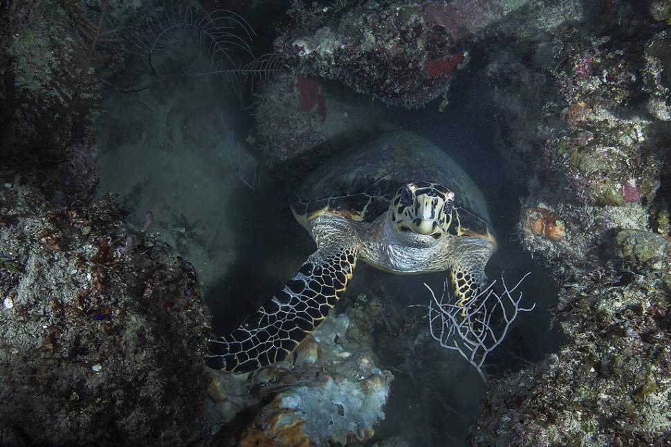 Snorkeling and Diving in Cuba - Best Season