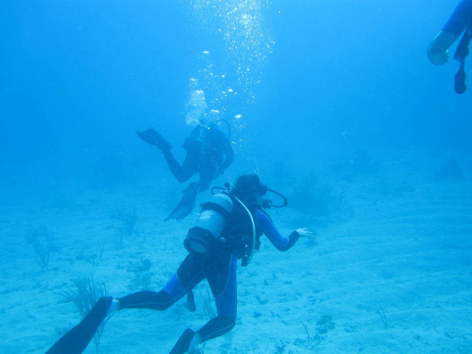 Snorkeling and Diving in Cuba - Best Time