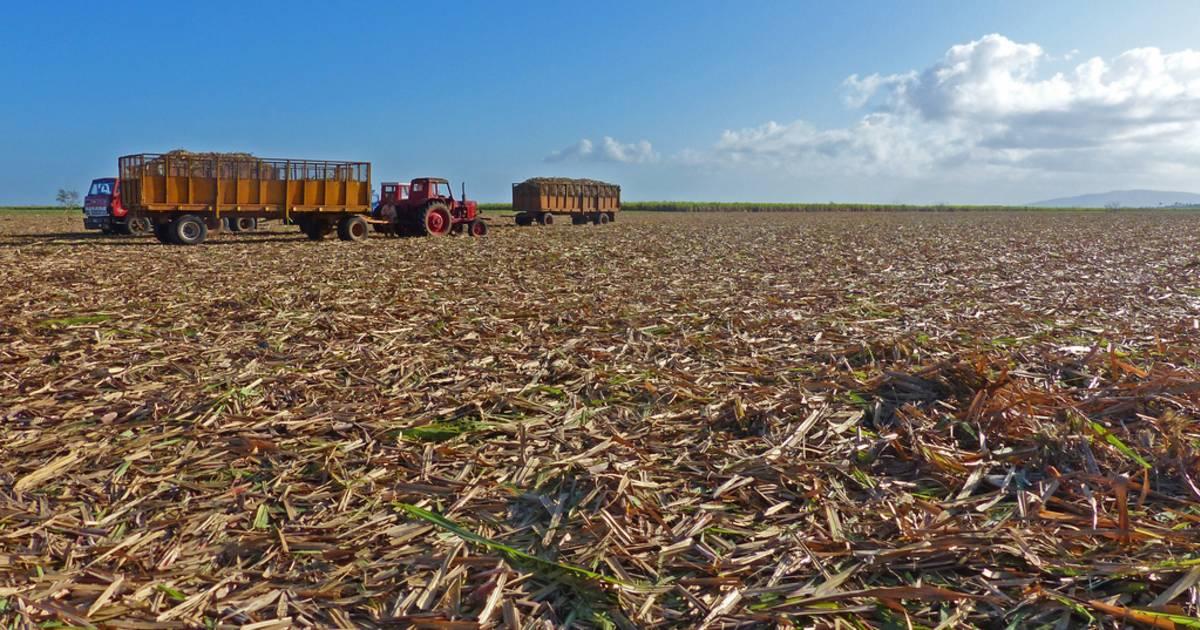 Zafra Harvest in Cuba - Best Time