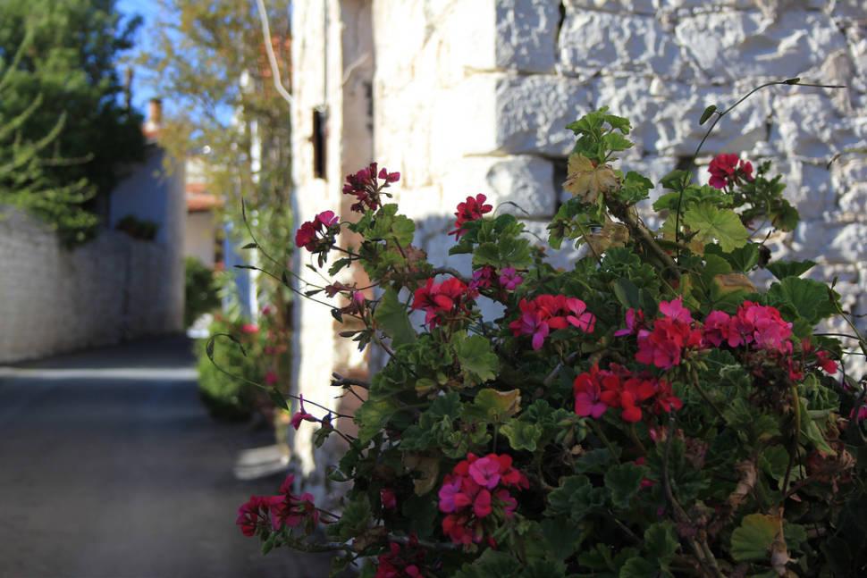 Anthestiria or Flower Festivals in Cyprus - Best Season